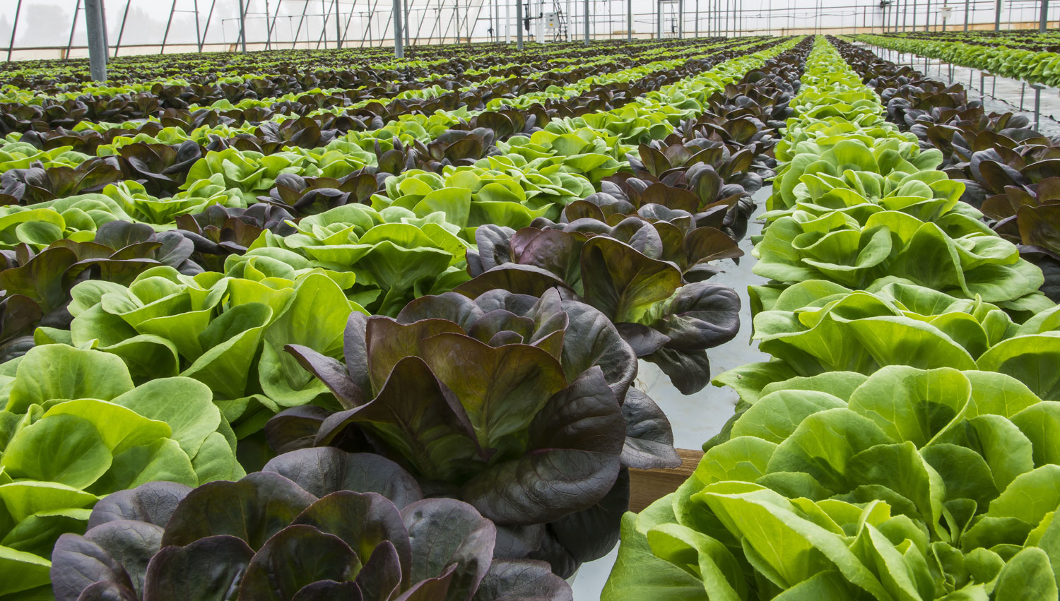 Horticulture and The Environment